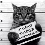 chat en prison : J'ai fait tomber le sapin de Noël !