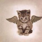 le chaton ange