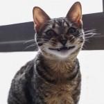 le sourire magique du chat