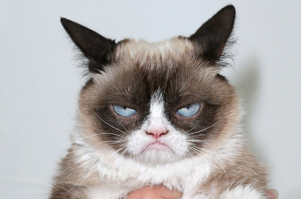 The Grumpy Cat!