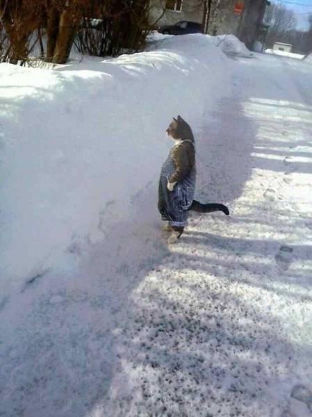 chat en salopette bleue, debout, dans la neige