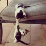 chaton qui en retient un autre par la patte