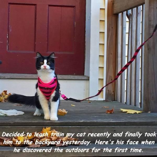 regard d'un chat qui découvre le monde extérieur pour la première fois !