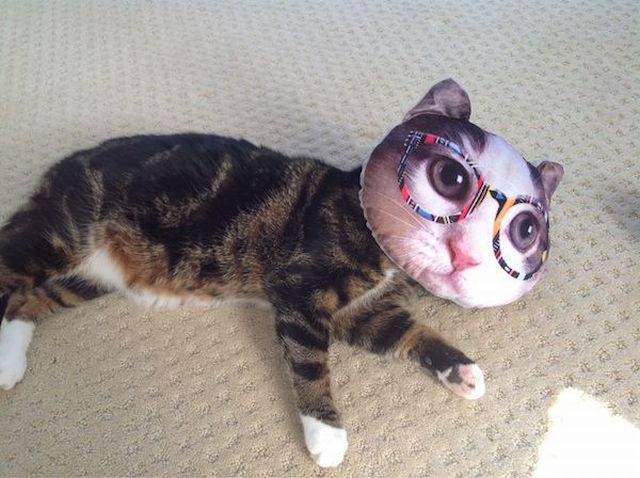 mi-chat mi-oreiller