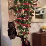 Chat qui pose à côté du sapin de Noël à l'envers