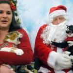 2 chats qui n'ont pas envie d'être sur la photo avec le Père Noel