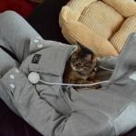sweatshirt avec poche spécialement conçue pour les chats