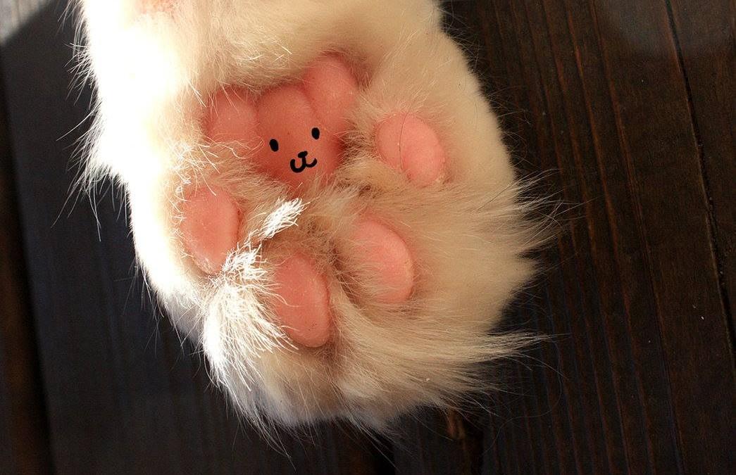 Patte de chat, petit ourson