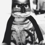 Batman, le chat !