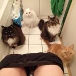 Les toilettes en toute intimité …