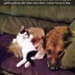 Chat et chien copains