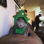 Chapeau: Sapin de Noël !