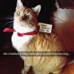 le chat a déjà mangé !!