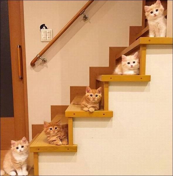 Chatons dans les escaliers
