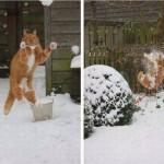 Chat bataille boules de neige