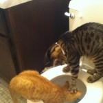 swirlie de chats