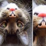 Regardez de plus près cette tête de chat !