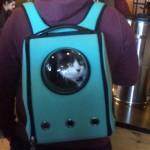 Chat dans un sac à dos