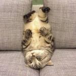 Chat allongé la tête en bas