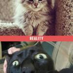 petit chat, attentes vs. réalité