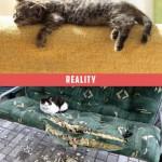 chat qui dort sur le canapé, attentes vs. réalité
