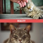 tendresse du chat, attentes vs. réalité