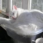 chat confortablement installé dans une petite boite transparente