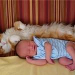 enfant en bas-âge qui dort collé à son chat