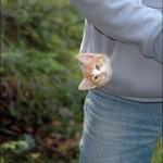 chaton dans la petite poche d'un sweatshirt