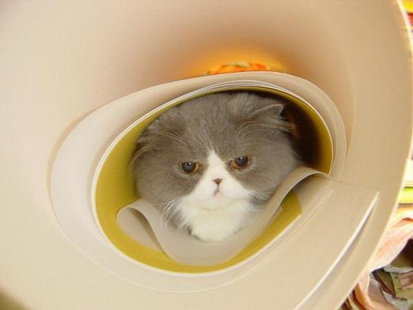 chat qui se cache dans de grandes affiches enroulées