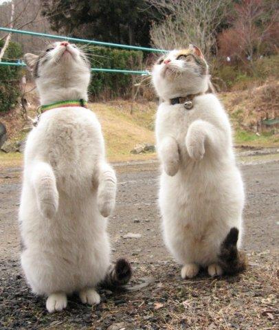 2 chats debout qui regardent en l'air
