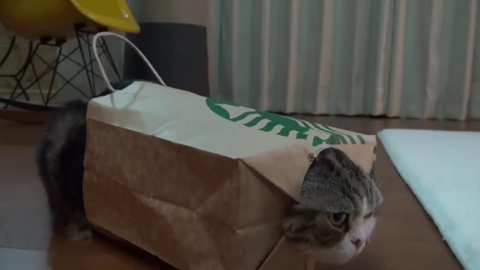 Chat qui joue avec un sac en papier …