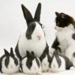 le vilain petit lapin …
