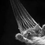 chaton gris dans son hamac