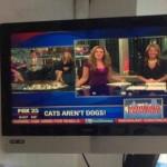 Les chats ne sont pas des chiens ! Merci Fox News on ne le savait pas !