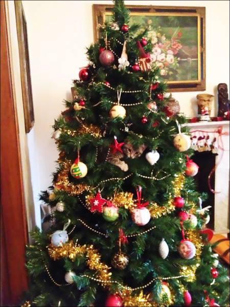 trouverez-vous le chat caché dans le sapin de Noël ?
