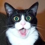chat la bouche ouverte