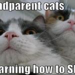 grand parents chats qui apprennent à skyper