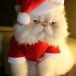 le chat Père Noël