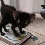 chaton noir sur un disque dur