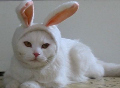 chat lapin !