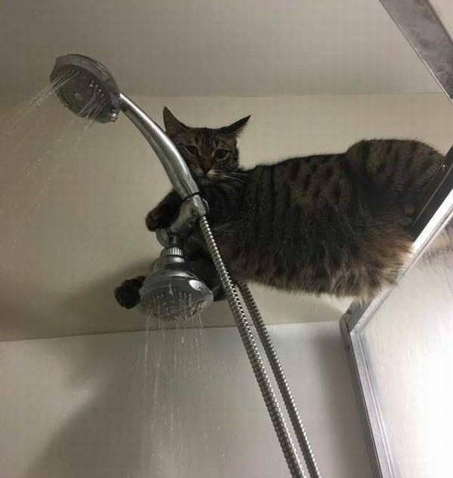 chat perché dans la douche …