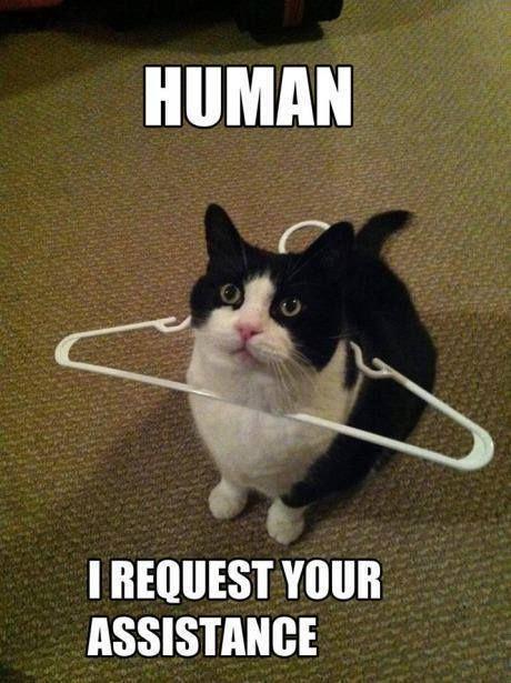 humain : j'ai besoin de ton aide