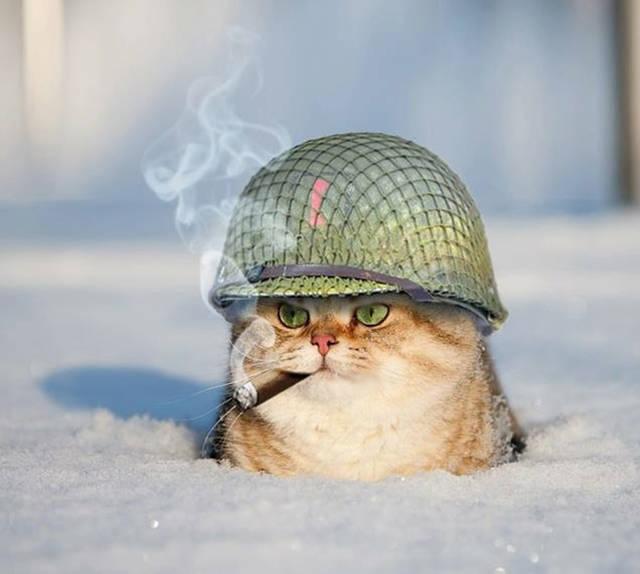 Colonel Le Chat !