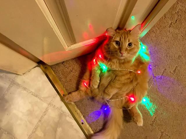 chat … enguirlandé !