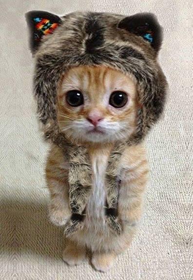 chat déguisé en ewok