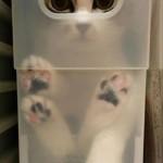 chat caché dans la caisse … transparente !