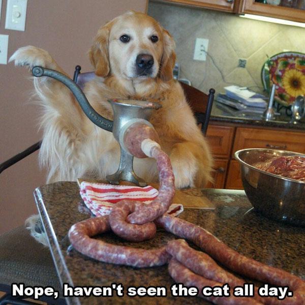 Nan, j'ai pas vu le chat de la journée.